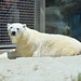 San Diego Zoo Polar Bear