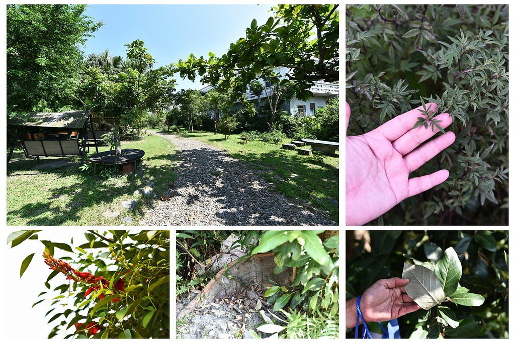 園區植物1
