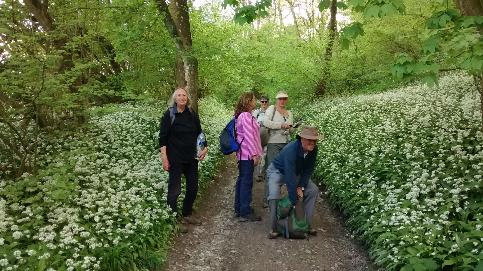 Wild Garlic and walkers