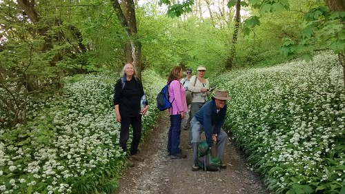 Wild Garlic and walkers