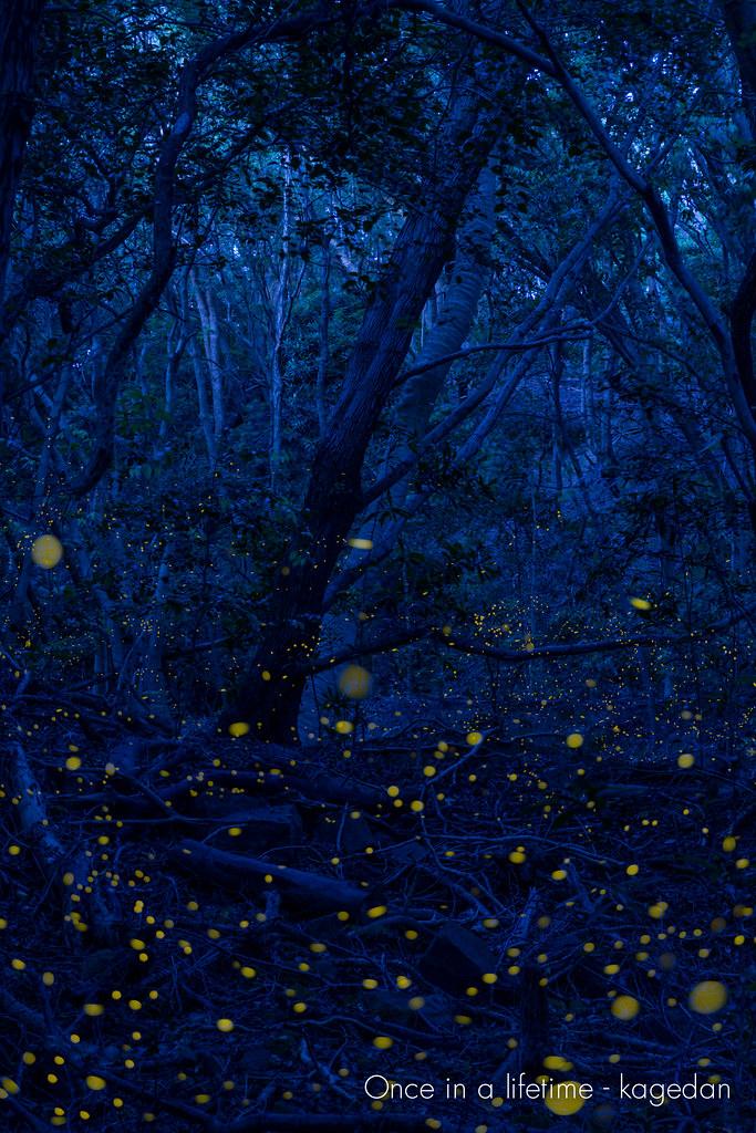 静かな森の中