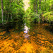 The Big Cypress National Preserve by ap0013
