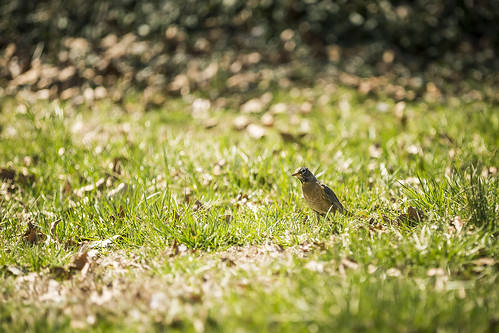 plant bird nature grass animal bokeh wildlife beak feathers dry leafs