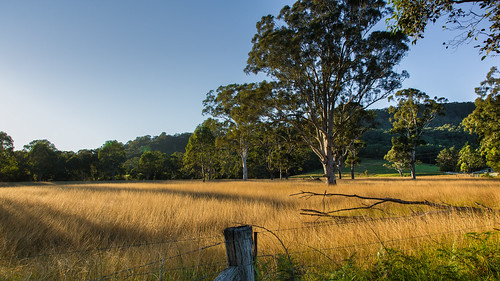 morning trees rural sunrise fence landscape dawn countryside scenery shadows farm australia nsw grasslands kangaroovalley greystump copyrightcolinpilliner