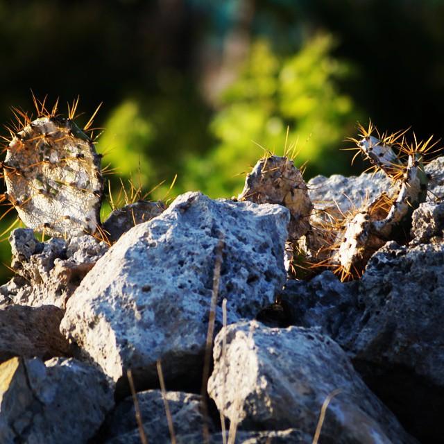 Las rocas del cerro de Dzilam González