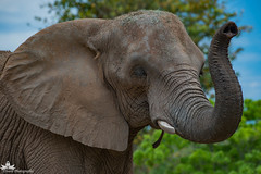 Peggy the Elephant
