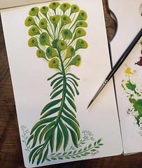 Weird plant/flower