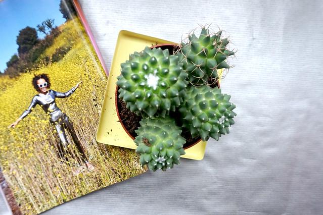 Cactus May