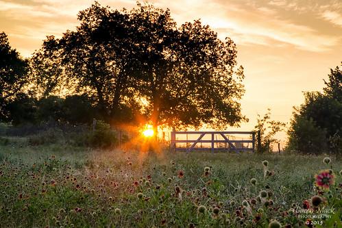 sun nature sunrise landscape wildflowers carenmack thegreattrinityforest thepembertonfarm