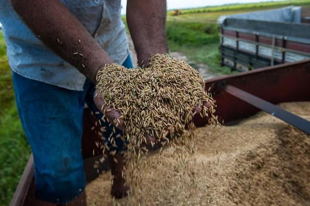 Atualmente, quatro grupos de produçãocom três ou quatro agricultores cada distribuem cerca de 170 sacolas com produtos orgânicos para consumidores fidelizados. - Créditos: Reprodução MST