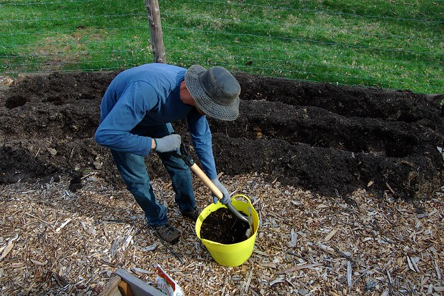 Turning the compost for the asparagus trench by Eve Fox, The Garden of Eating, copyright 2015
