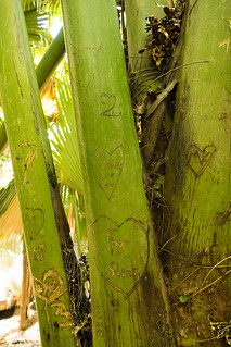 Vallée de Mai の画像. sc seychelles praslin valleedemai