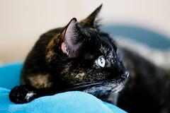 Fotosession mit Katze Mia