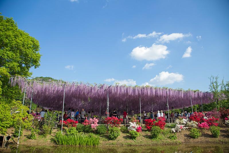 ashikaga_flowerpark-56