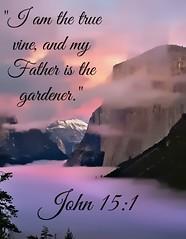John 15:1 niv