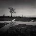 Tidepool Tree by Joe Iannandrea