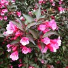 Bloom #spring #Michigan #love #floral
