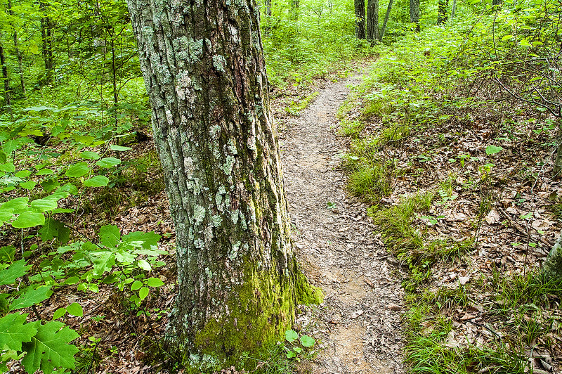 Hoosier National Forest - Charles C. Deam Wilderness Area -  Hayes Trail - June 3, 2015
