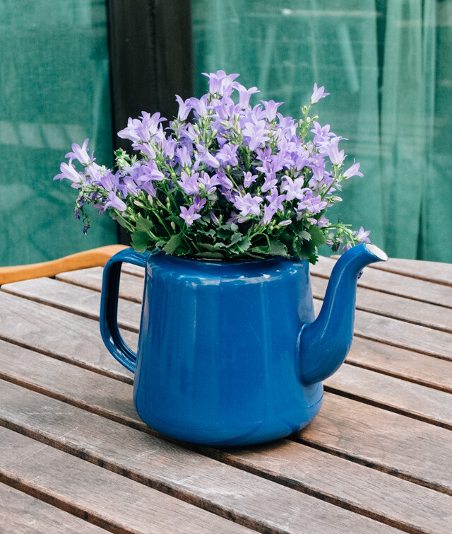 bluebells in blue teapot