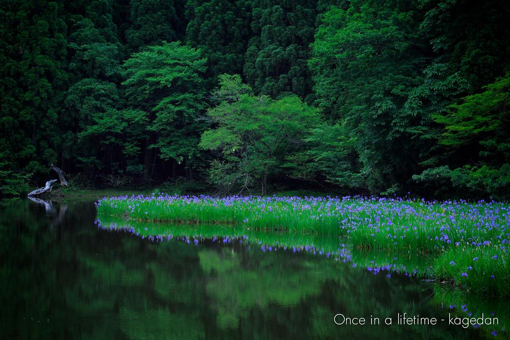 燕子花の情景