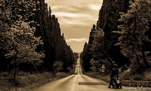 Il viale di Bolgheri