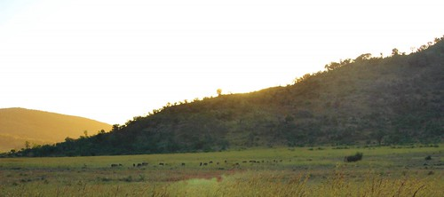 Sunset with a herd of Wildebeest in the distance our last game drive.