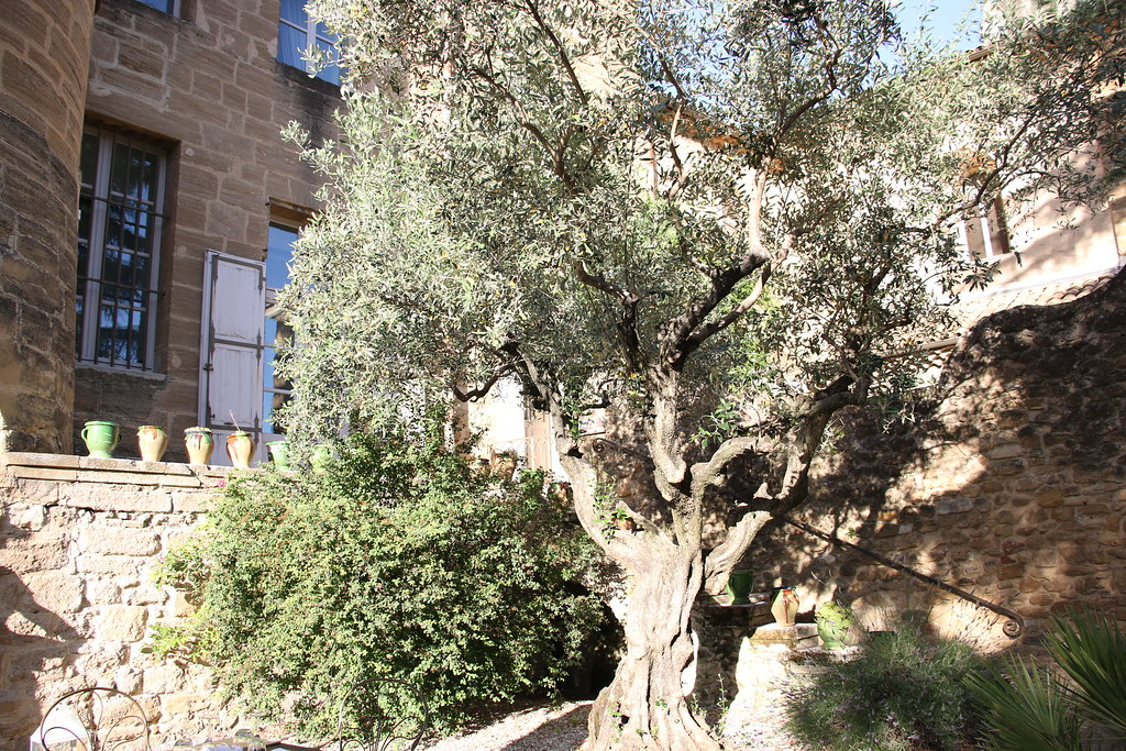 provence rochegude caslte olive tree
