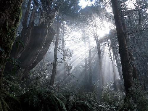 台東山區暗夜山羌的聲動野地(遠流提供)