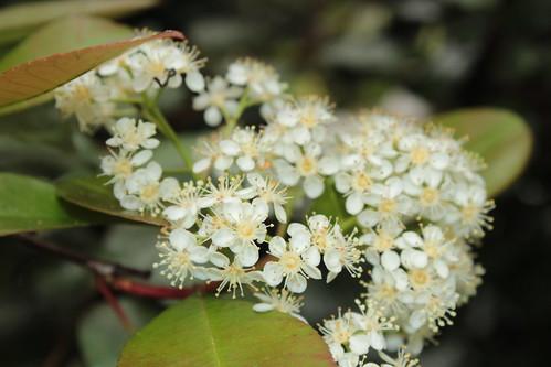 le joli mois de mai des fous jardiniers - Page 2 17144329417_764a1e465a
