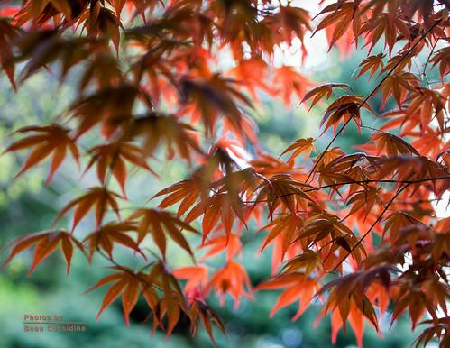 New spring leaves