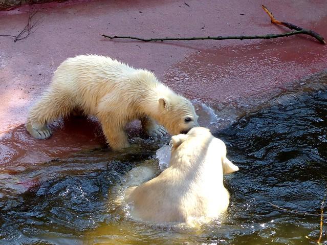 Polar Bear Fiete, giving Mom a kiss:)