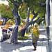 Locust Street Pasadena by VHein