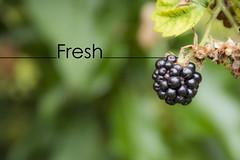 Fresh (29of365)