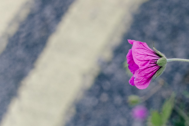 small purple flower on side of road