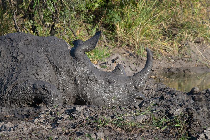 Rhino Spa