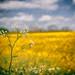 In Bloom by Steve Millward