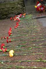 Дорожка из цветов