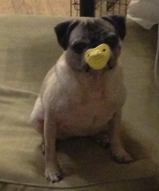 Tallulah with her binky