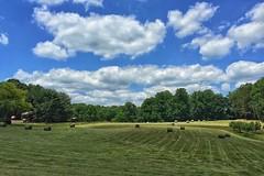 North Carolina Hay Field in May