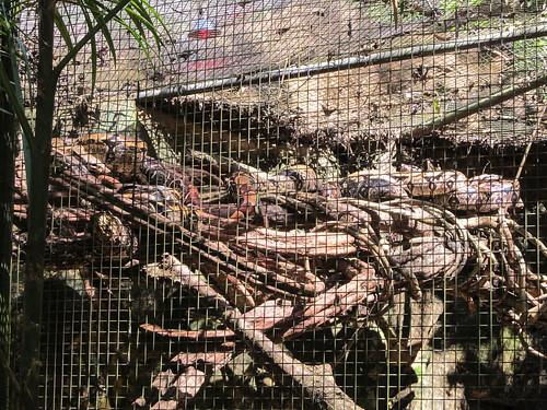 Le Parc des Oiseaux d'Iguaçu: des boas constrictors