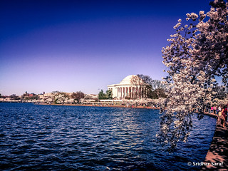 National Cherry Blossom Festival, Washington DC (USA) - April 2015