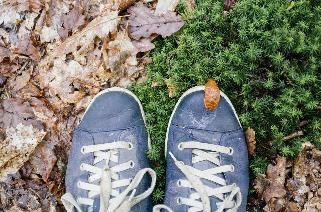Tourisme vert en France -Ardennes - Une copine