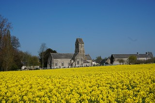 Normandy church and a field of canola flowers