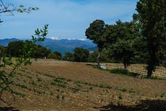 Alpes de Haute-Provence - Photo of Puimichel