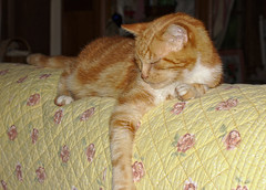 Caramel on the back of the sofa