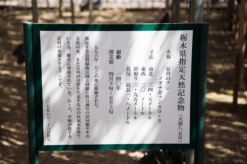 ashikaga_flowerpark-10