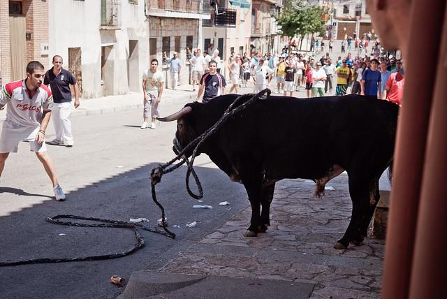 La crueldad de los festejos taurinos