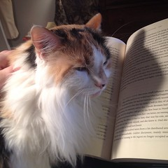 Petting time (resistance is futile). #catsofinstagram, #iainpears, #books, #cats, #suchaprettykitty