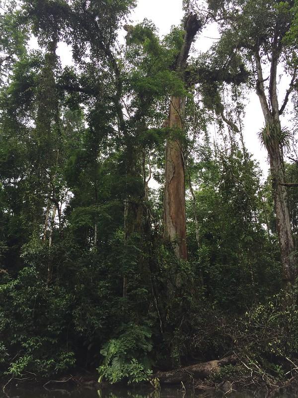 Río San Juan Nicaragua