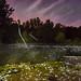 Summer fluff raining into my pond by Chris Arnade